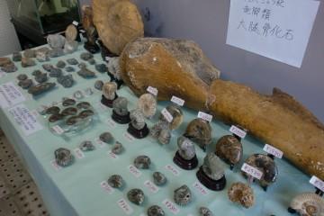 2012/8/4 化石2