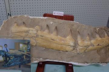 2012/8/4 化石