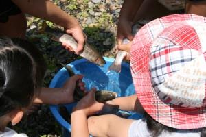 130630魚つかみ取り池