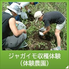 ジャガイモ収穫体験 (体験農園)